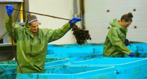 Natalie Spooner and Meaghan Mikkelson are playing with mussels in Amazing Race Canada 2 episode 10