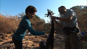 """""""Good Old Fashioned Spit in the Face""""--In Detour A, Logan (left) and Chris (right) must stain and polish a wooden giraffe in order to receive the next clue on THE AMAZING RACE, Friday, Oct. 16 (8:00-9:00 PM, ET/PT) on the CBS Television Network. Photo: CBS ©2015 CBS Broadcasting, Inc. All Rights Reserved"""